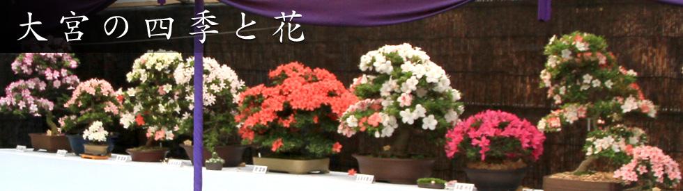 大宮の四季と花